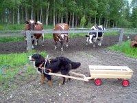 Ratkaisu maatilan logistiikka ongelmiin